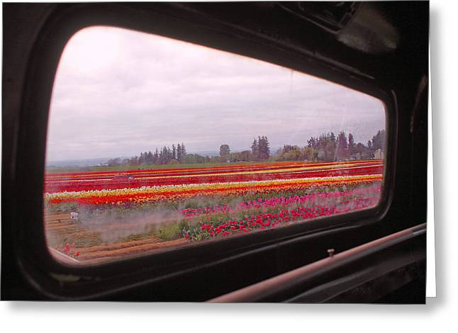 Looking Through The Rear-view Window Greeting Card by Kami McKeon