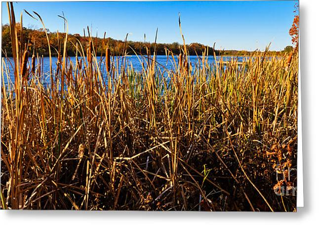 Greeting Card featuring the photograph Looking Through The Reeds by Lawrence Burry