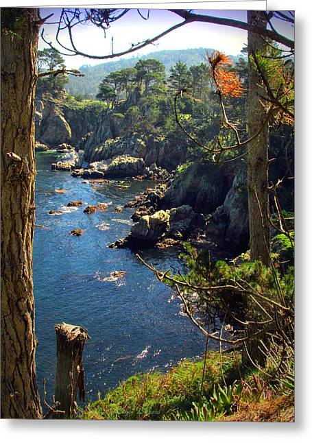 Looking Through The Trees At Point Lobos Greeting Card by Joyce Dickens