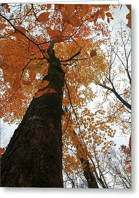 Greeting Card featuring the photograph Looking Up by Alicia Knust