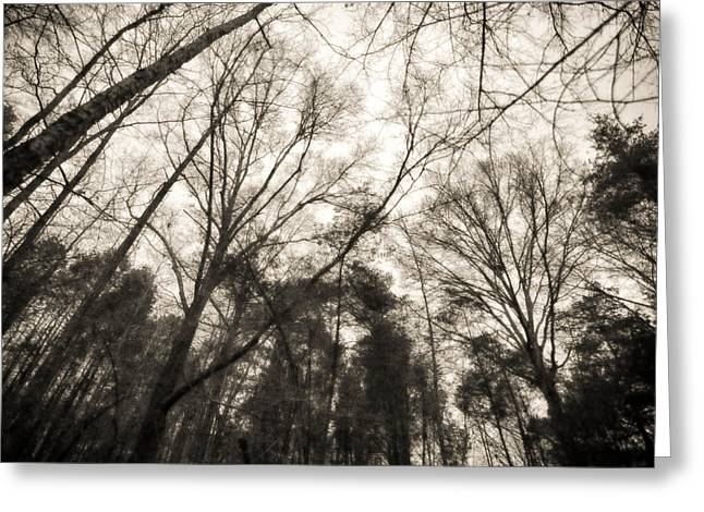 Looking Up At Trees Greeting Card by J Riley Johnson