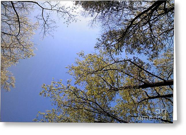 Greeting Card featuring the digital art Looking Up By Angela Clay by Angelia Hodges Clay