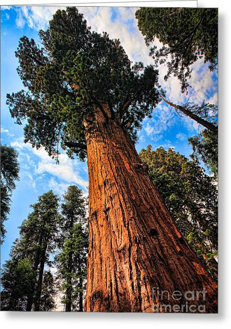 Looking Up Greeting Card by Inge Johnsson