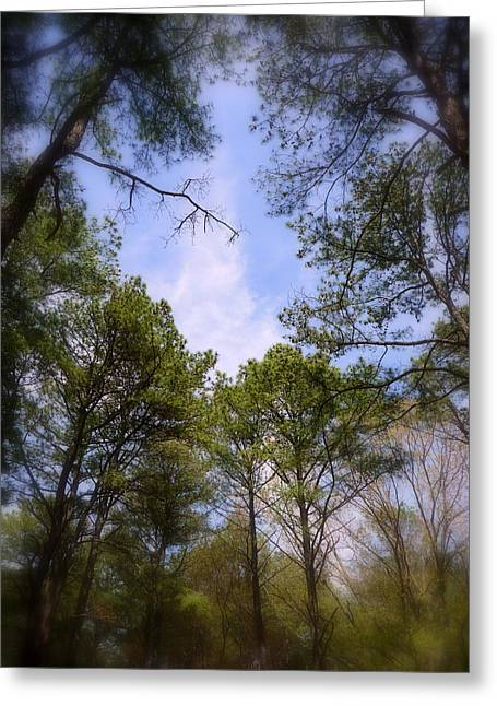 Greeting Card featuring the photograph Looking Up by Jim Whalen