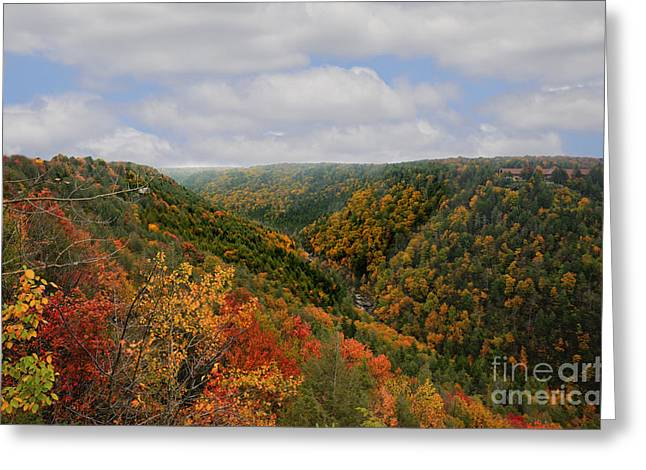 Looking Upriver At Blackwater River Gorge In Fall From Pendleton Point Greeting Card by Dan Friend