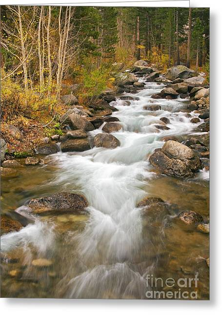 Looking Upstream Greeting Card by Alice Cahill