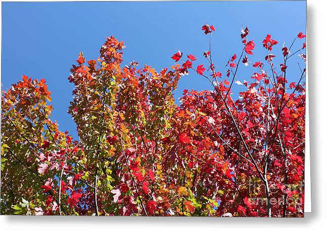 Greeting Card featuring the photograph Looking Upward by Debbie Hart