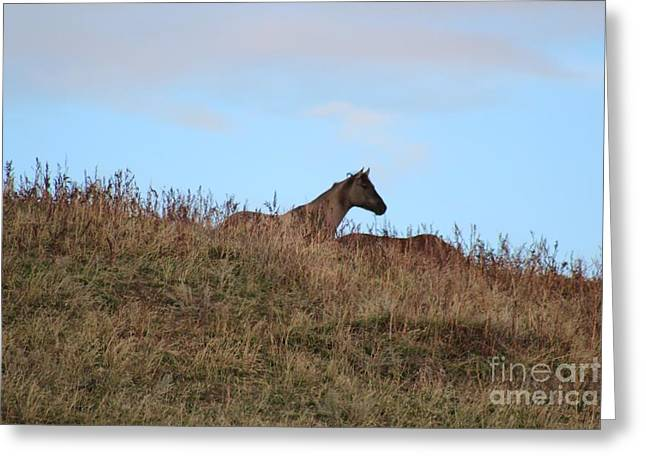 Lookout Greeting Card by Brenda Henley