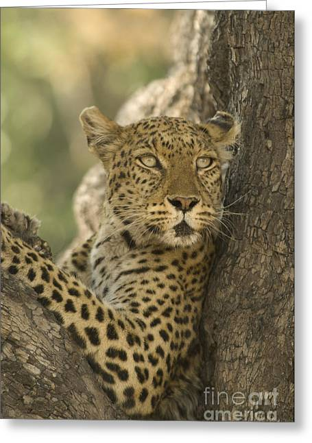 Lookout Greeting Card by Wayne Bennett