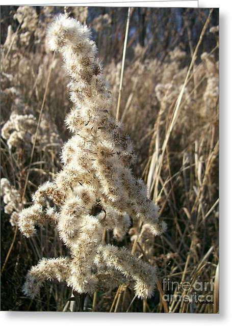 Greeting Card featuring the photograph Looks Like Cotton by Sara  Raber