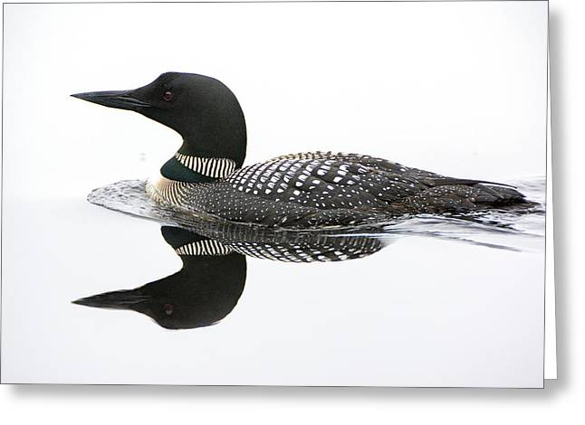 Loon #2 Greeting Card by Wade Aiken