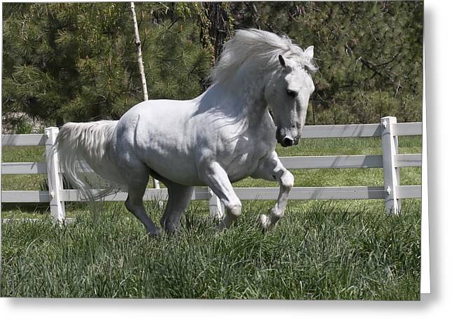 Loose In The Paddock Greeting Card by Wes and Dotty Weber