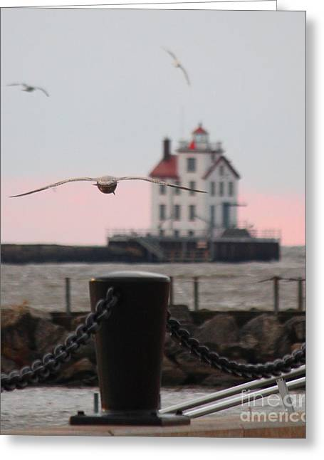 Lorain Lighthouse With Gulls Cropped Greeting Card
