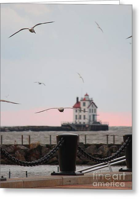 Lorain Lighthouse With Gulls Greeting Card