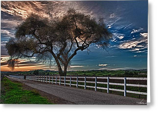 Los Alamos Vineyard Oak Greeting Card