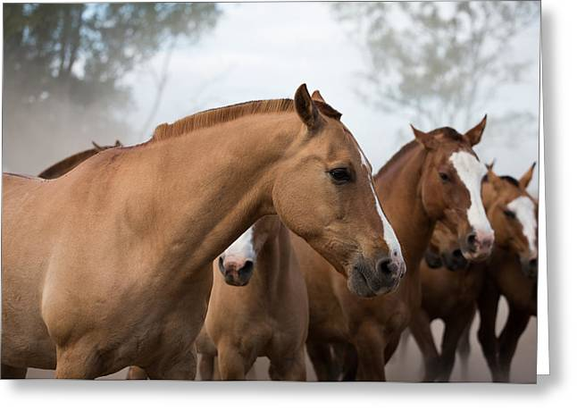 Los Caballos De La Estancia Greeting Card by John Daly
