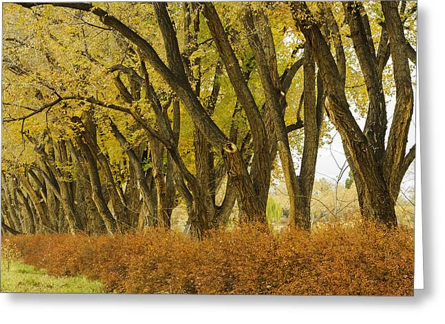 Los Poblanos Ranch Drive-003 Greeting Card by David Allen Pierson