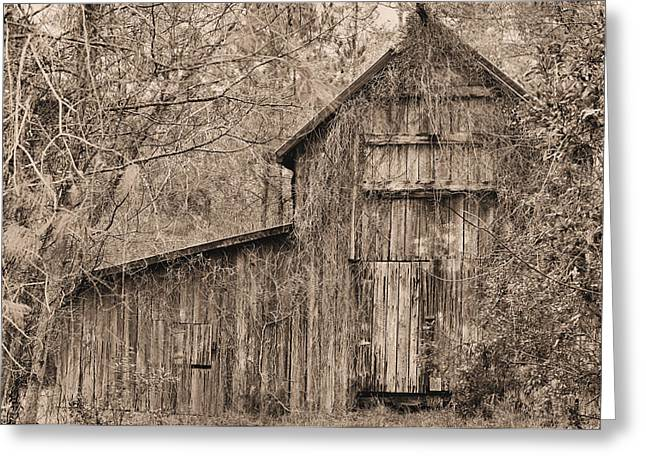 Lost And Found Sepia Greeting Card by JC Findley