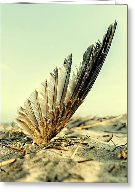 Lost Feather At The Beach Greeting Card