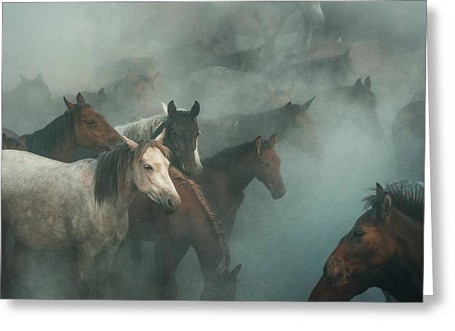 Lost Horses Greeting Card by H??seyin Ta??k??n