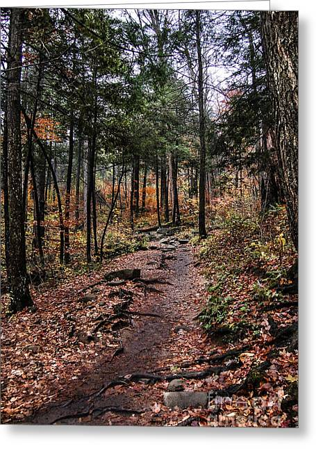 Greeting Card featuring the photograph Lost In Thought On The Blue Ridge Parkway Trail by Debbie Green