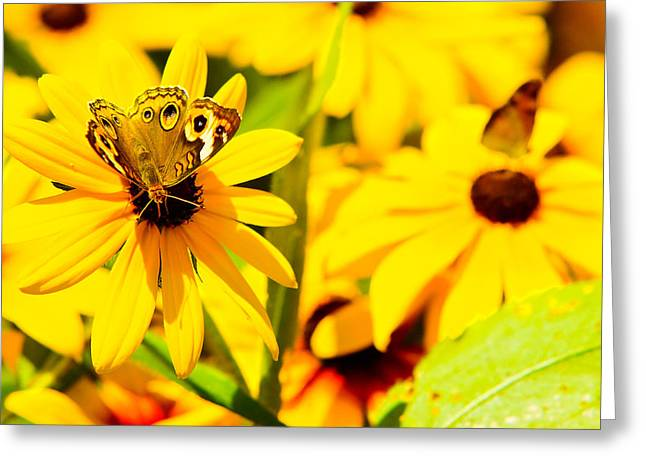 Lost In Yellow Greeting Card by Kevin Read