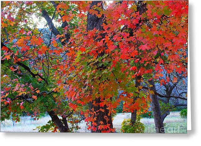 Lost Maples Fall Foliage Greeting Card