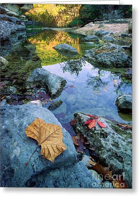 Lost Maples Reflection Greeting Card by Inge Johnsson