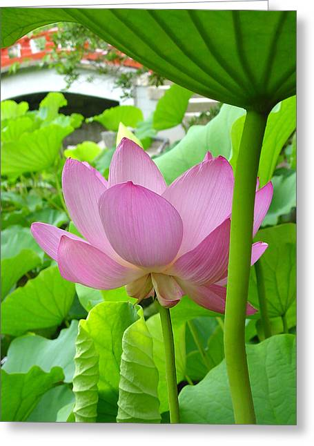 Lotus And Bridge Greeting Card by Larry Knipfing