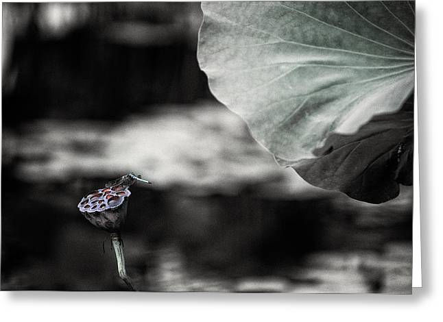 Lotus And Dragonfly 2 Greeting Card