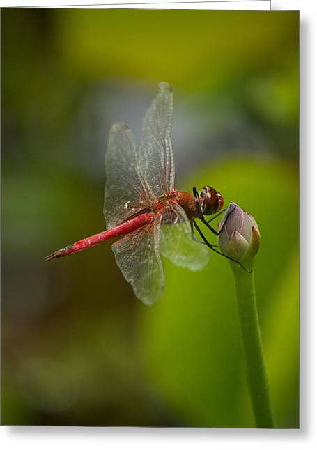 Lotus And Dragonfly Greeting Card by Bonita Hensley