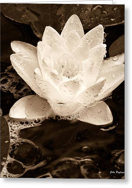 Lotus Blossom Greeting Card by John Pagliuca