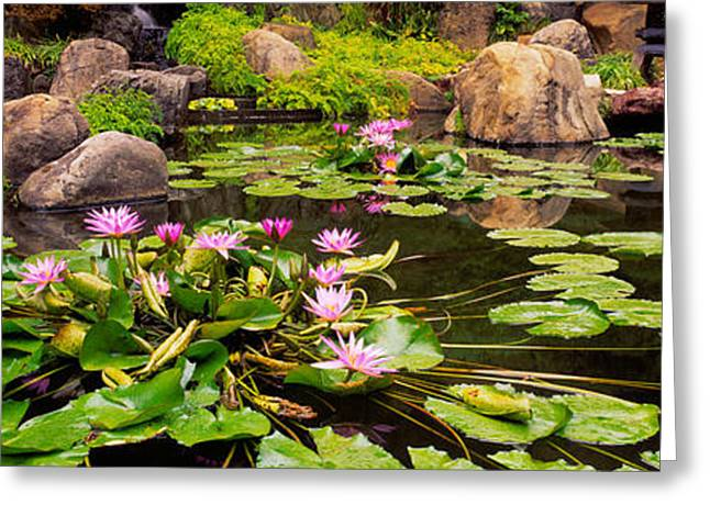 Lotus Blossoms, Japanese Garden Greeting Card by Panoramic Images