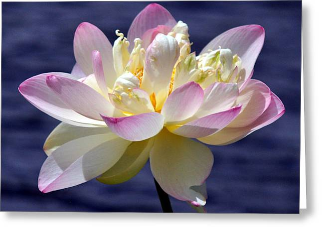Lotus By The Lake Greeting Card by Gail Butler