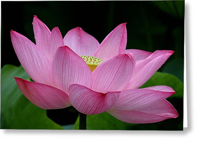 Lotus-center Of Being IIi Dl033 Greeting Card