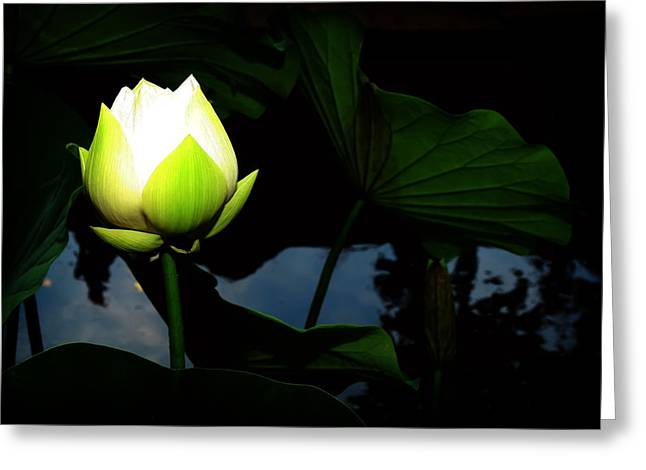 Lotus Flower 2 Greeting Card