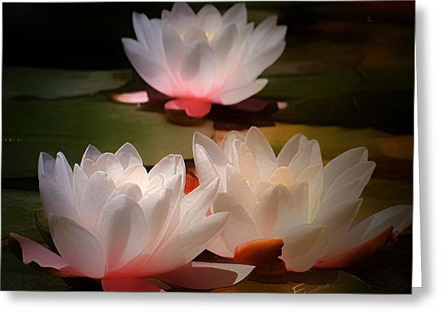 Lotus Flower 6 Greeting Card by Ernestine Manowarda
