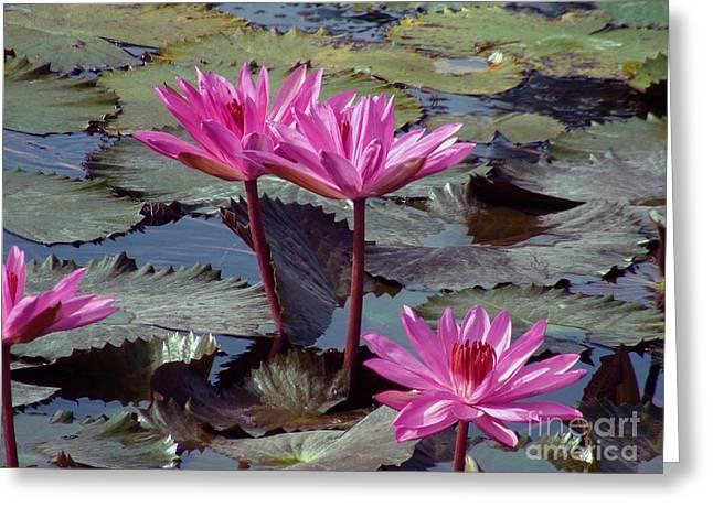 Lotus Flower Greeting Card by Sergey Lukashin
