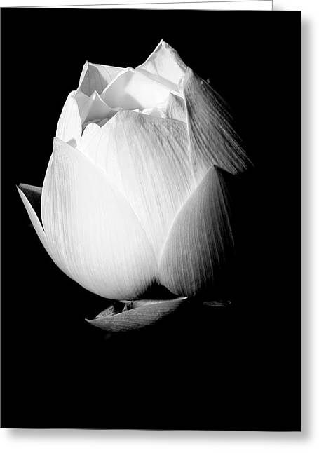 Lotus In Black And White Greeting Card