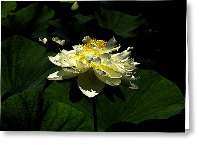 Greeting Card featuring the digital art Lotus In Sunlight by John Freidenberg