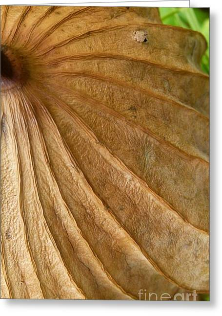 Greeting Card featuring the photograph Lotus Leaf by Jane Ford