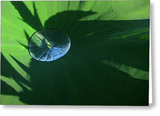 Lotus Leaf With Dew   Greeting Card