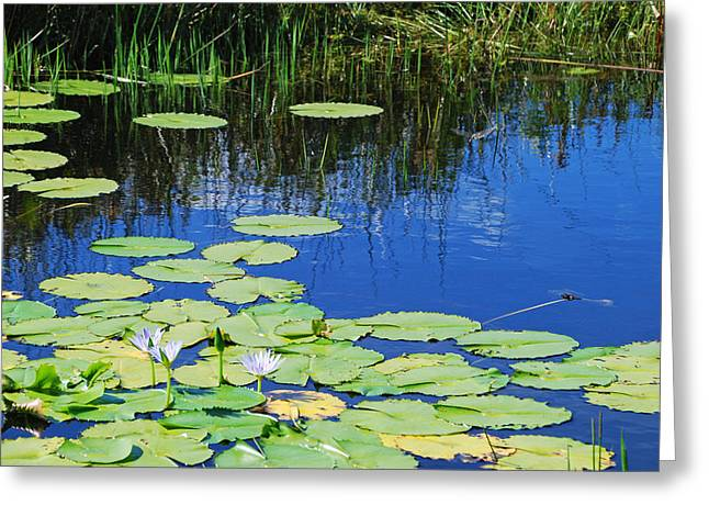 Greeting Card featuring the photograph Lotus-lily Pond by Ankya Klay
