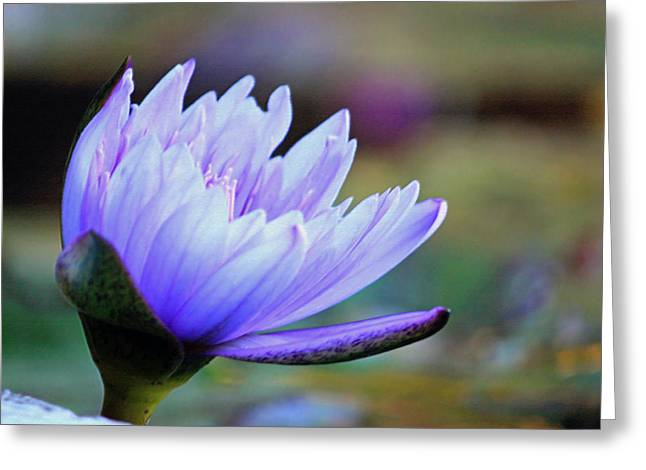 Lotus Love Greeting Card by Suzanne Gaff