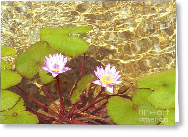 Greeting Card featuring the photograph Lotus by Mini Arora