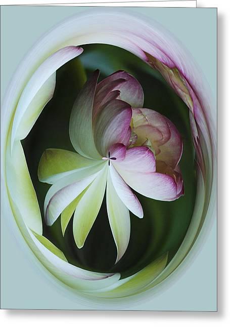Lotus Mirror Greeting Card by Jean Noren