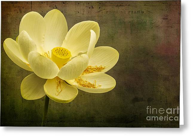 Greeting Card featuring the photograph Lotus Notes by Vicki DeVico