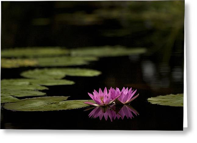 Lotus Reflections Greeting Card by Marilyn Hunt