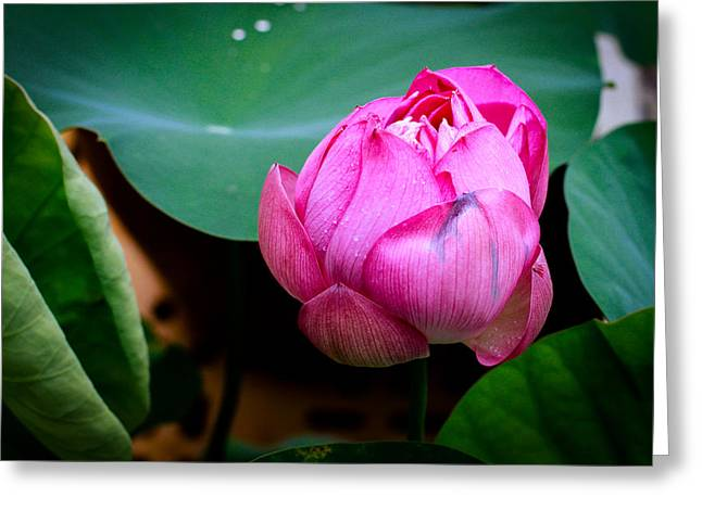 Lotus Singapore Flower Greeting Card by Donald Chen