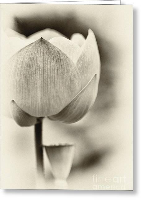 Lotus Greeting Card by Tim Gainey